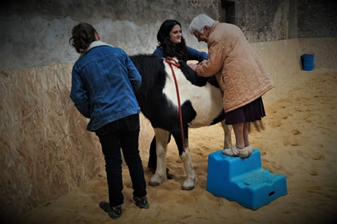 therapie avec le cheval vienne